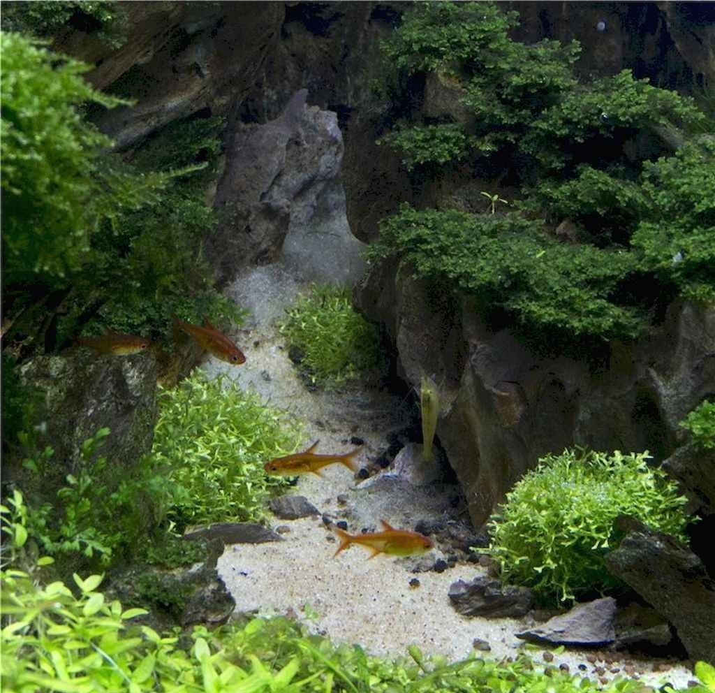 Relaxation-Aquascaping-Ideas-for-Inspiration-10 ...